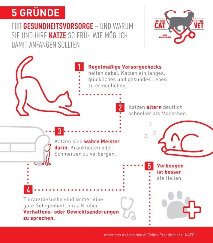 Gesundheitsvorsorge bei Katzen